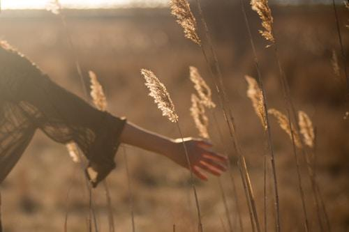 A woman touching wheat in the sun