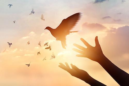 bird being set free