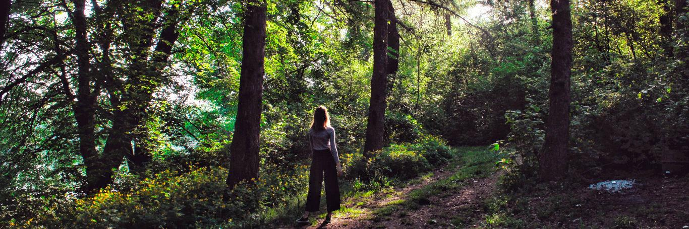 Have you tried Forest Bathing?