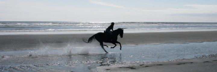 Flowing With Life Can be Like Riding a Horse